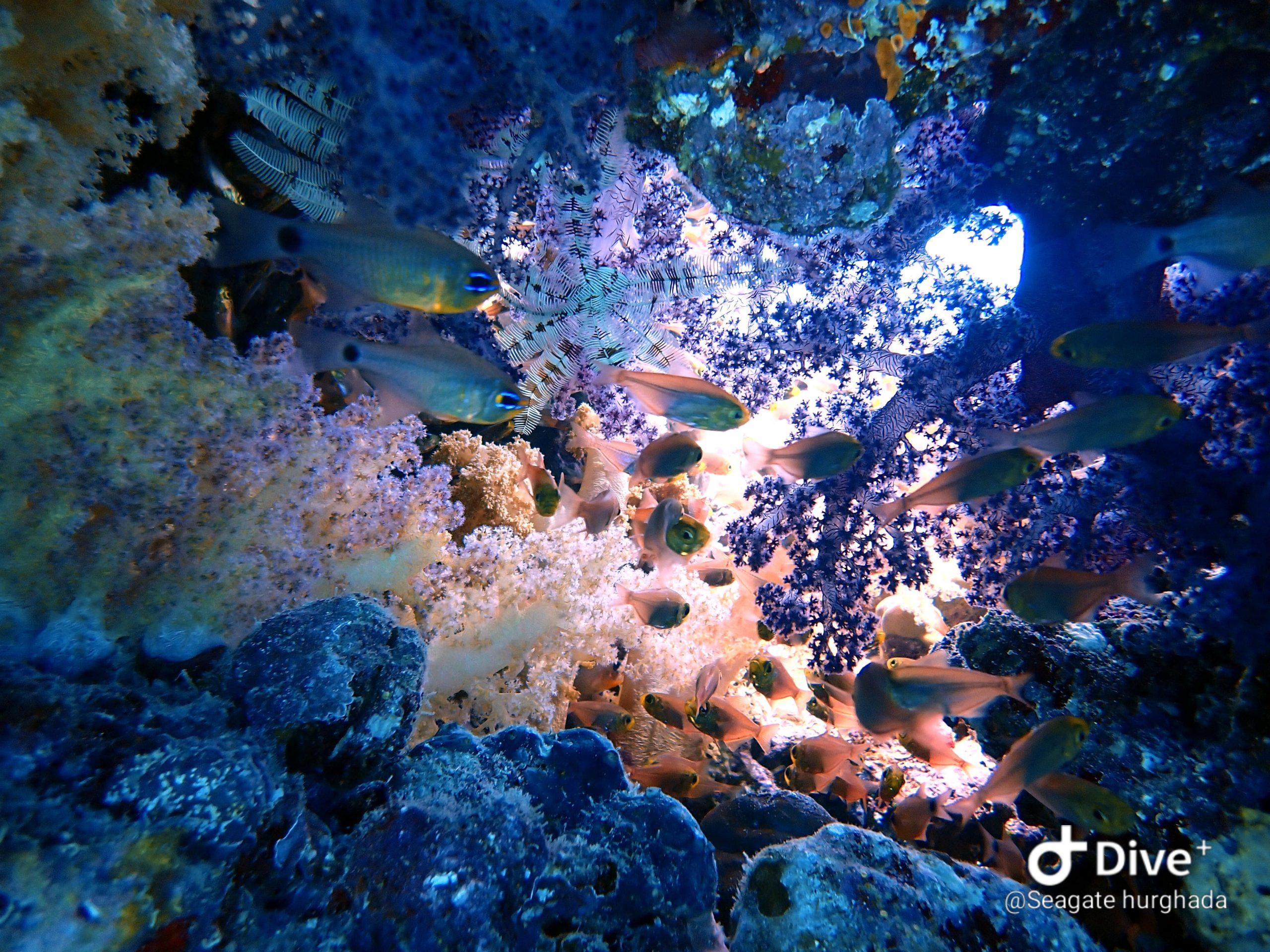 Koraal Rode Zee bij Hurghada