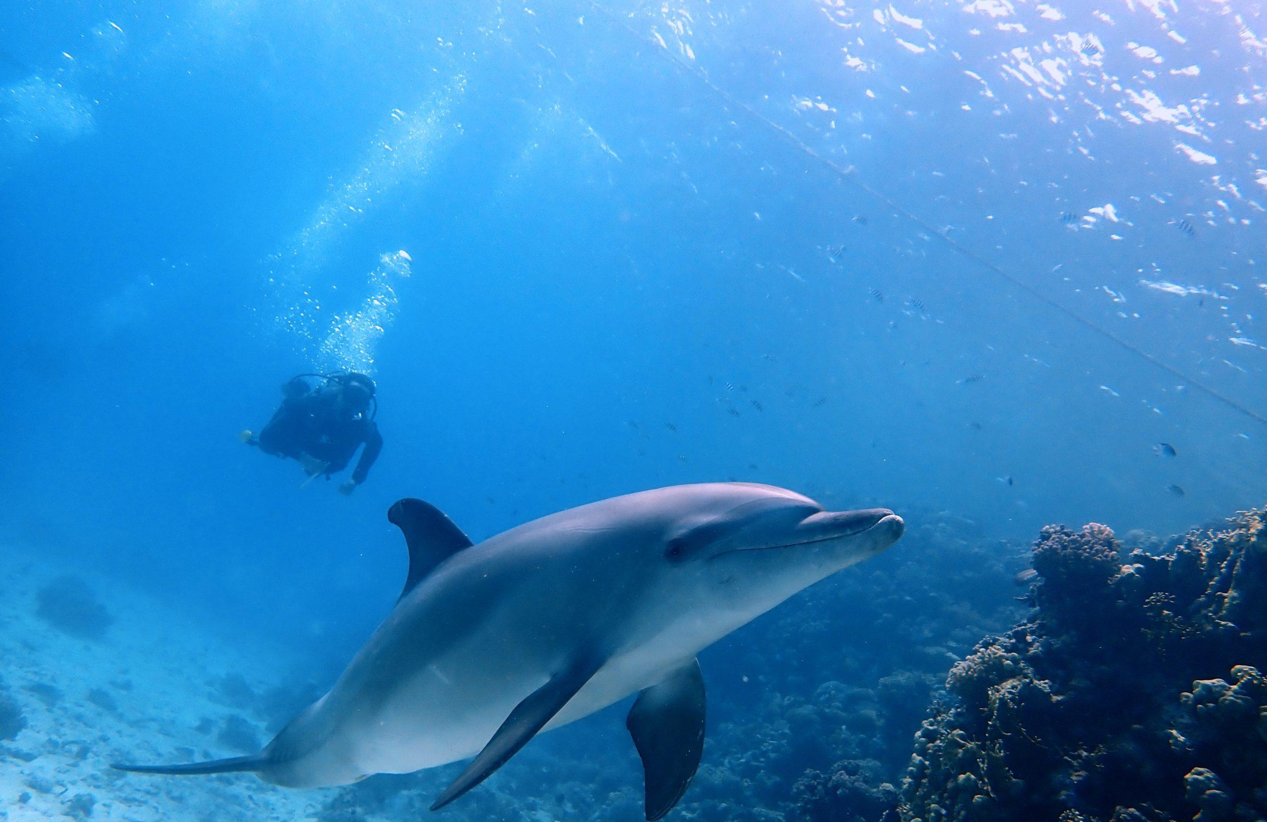 Seagate-Hurghada-Duiken-Scuba-Diving-Padi-Duikcursus-Divingcourse-Prijzen-Prices