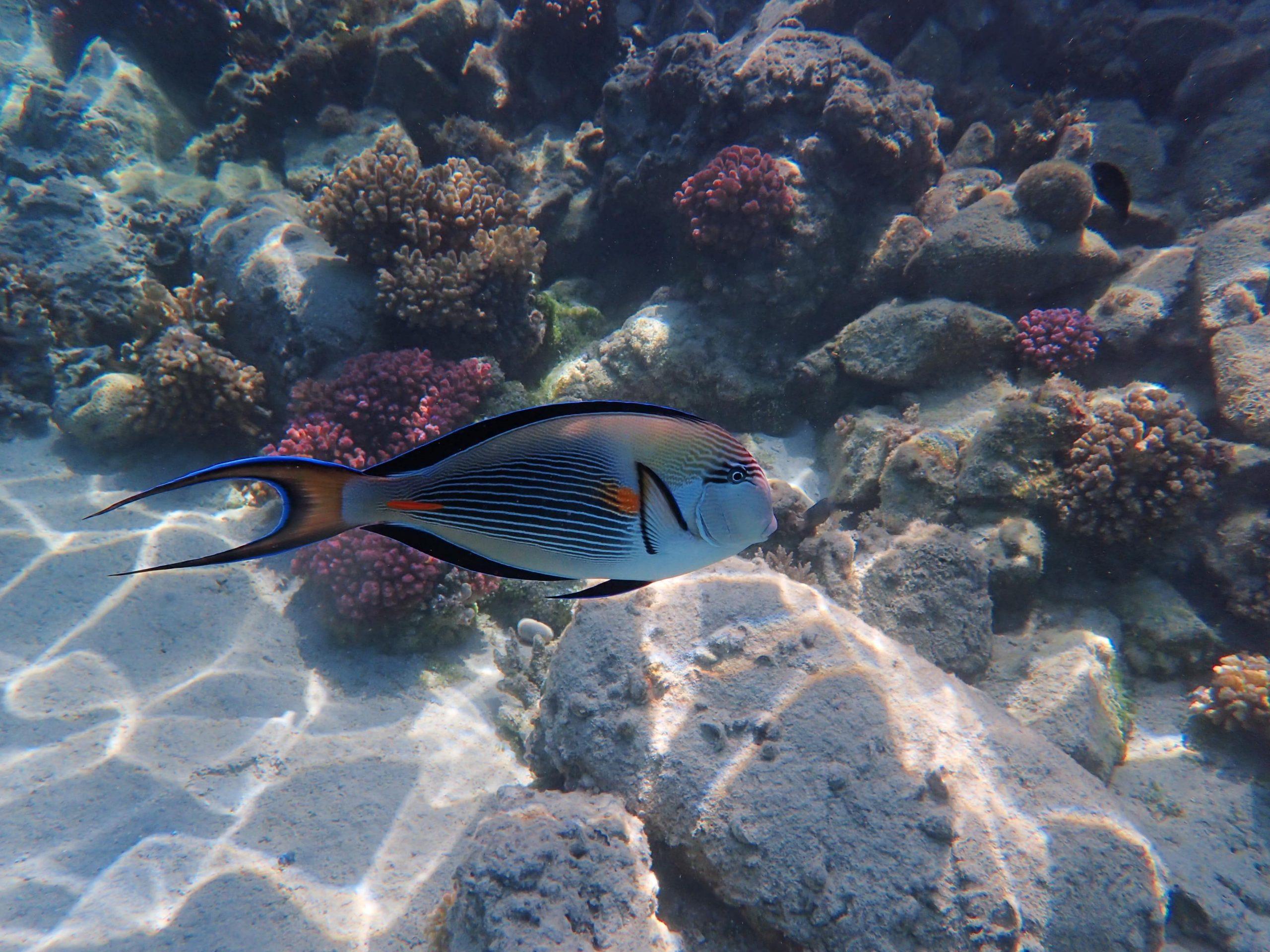 Duiken Hurghada Seagate Helder Water Duikcursus