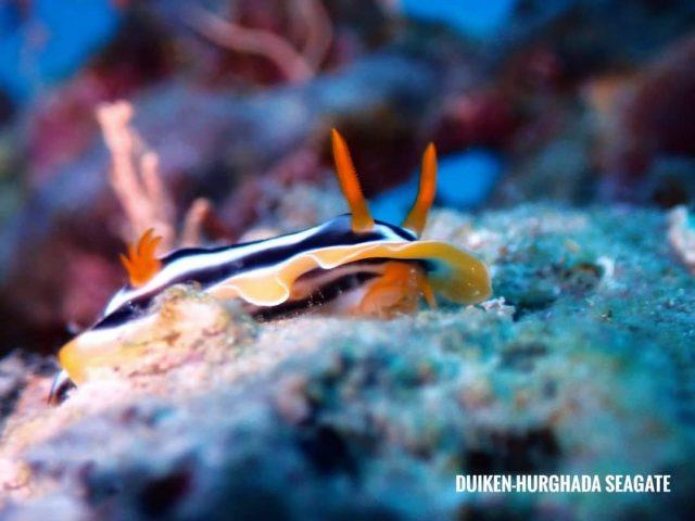 Duiken in Hurghada-Nederlandse duikschool-Rode Zee-in Egypte