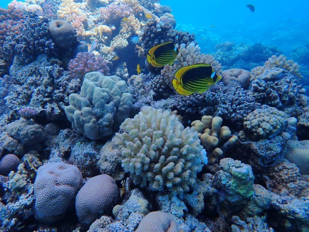 Duiken-Hurghada-Seagate-Duikcursus