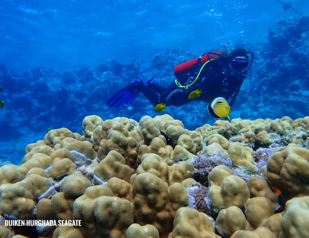 Duiken Hurghada Egypte Rode Zee Duikcursus