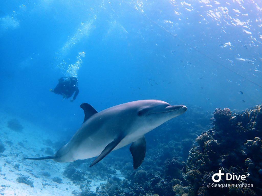 Duiken-Hurghada-Seagate-Duiken-in-Hurghada