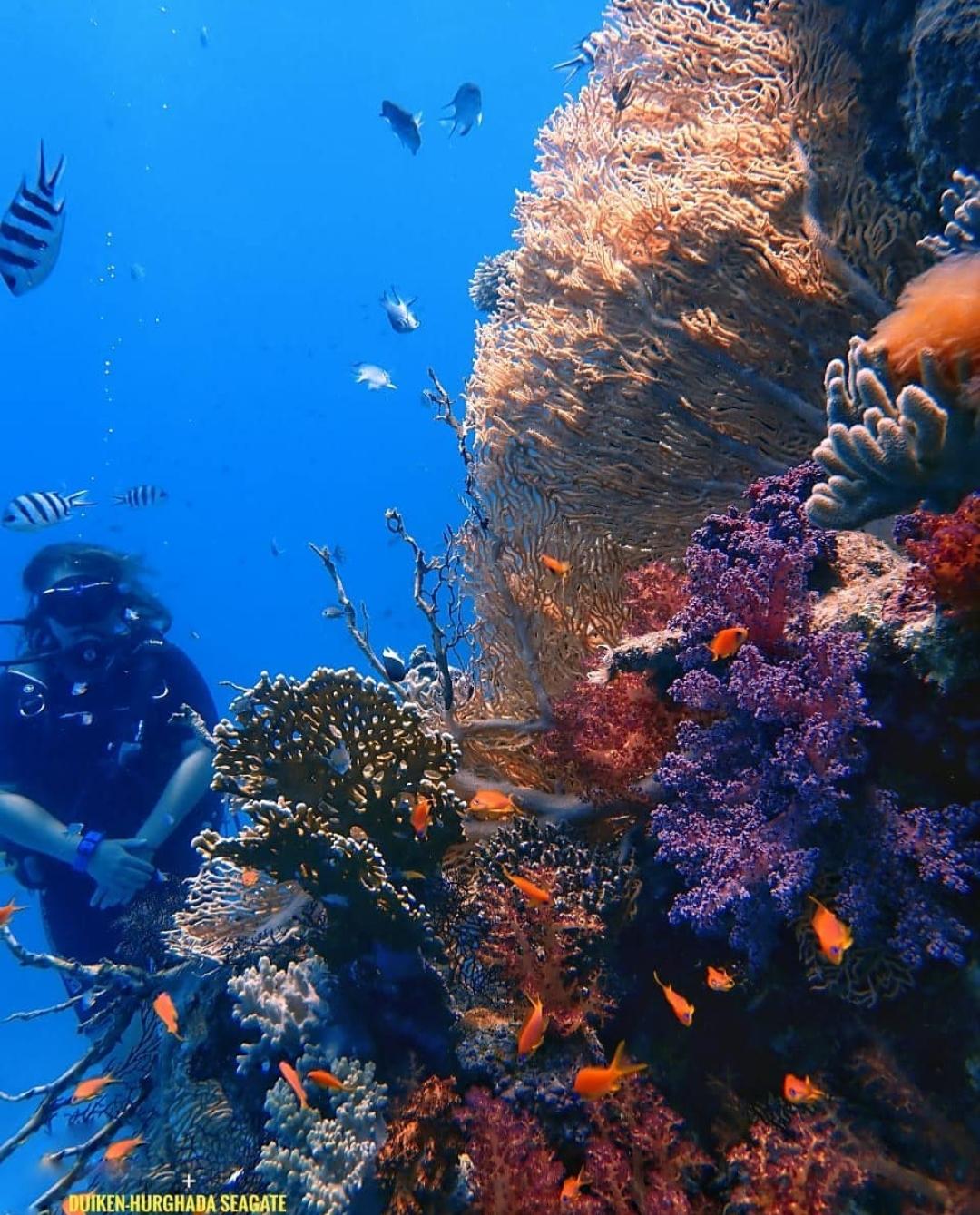 Koraalrif Rode Zee - Duiken Hurghada