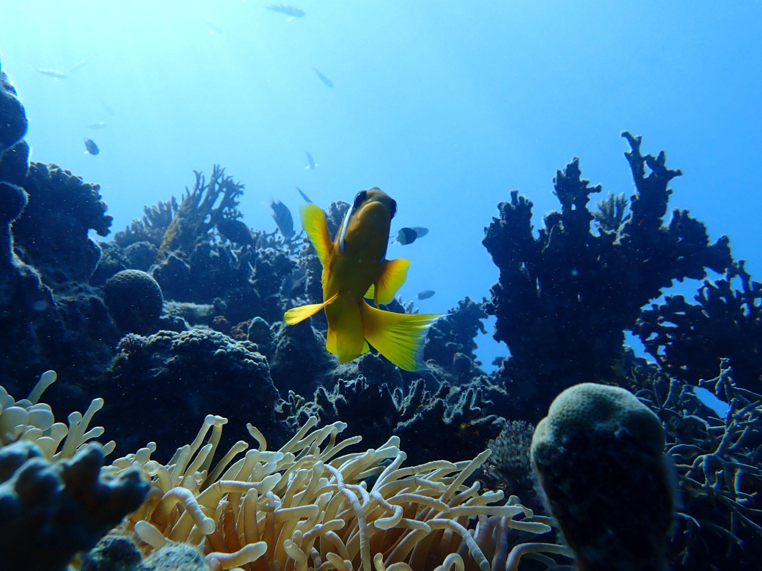 Duiken in Hurghada Nemo